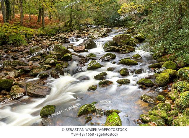 Rocky River Plym flowing through Dewerstone Wood near Shaugh Prior in Dartmoor National Park, Devon, England, UK, Europe