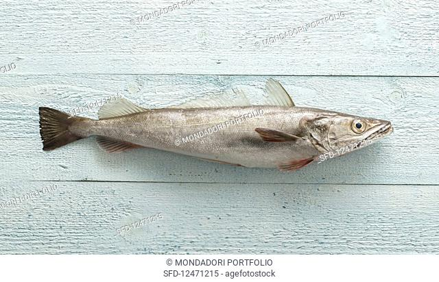 Cod on a pastel-blue surface