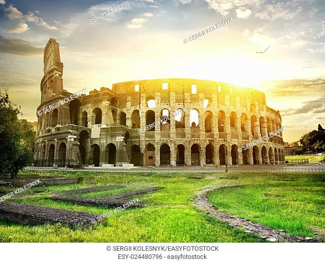 Bird over Colosseum and beautiful yellow sunset