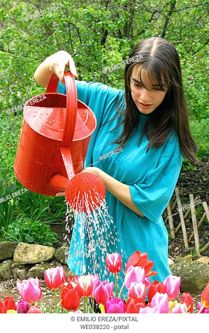 Girl watering tulips (Tulipa hybr.)