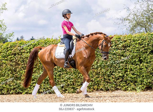 Wuerttemberg Warmblood. Young rider with chestnut gelding walking on a riding place. Germany