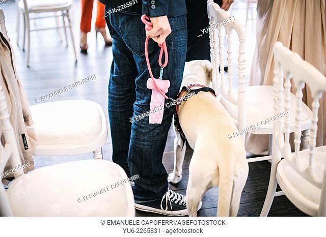 Dog on a leash during a wedding reception