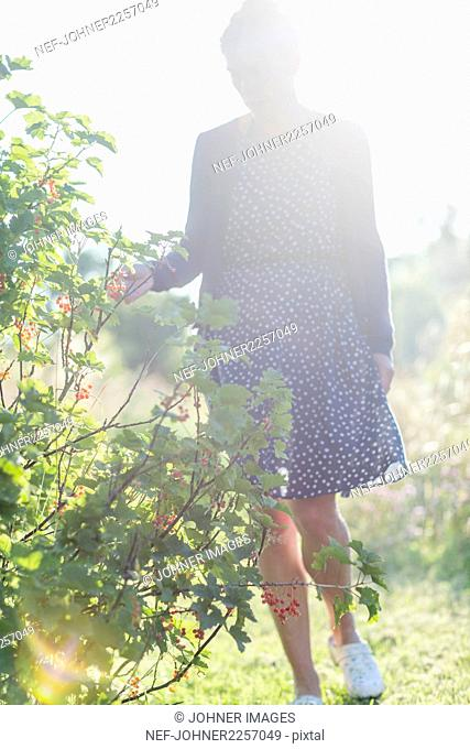 Woman walking in garden at sunny day
