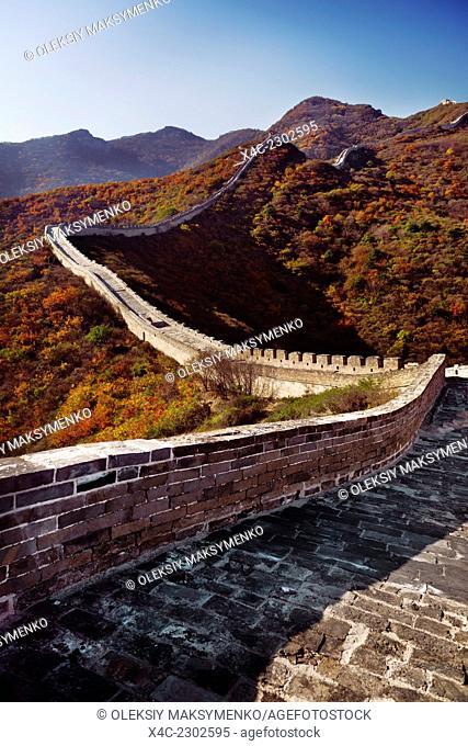 Great Wall of China in fall scenery. Badaling, Beijing, China