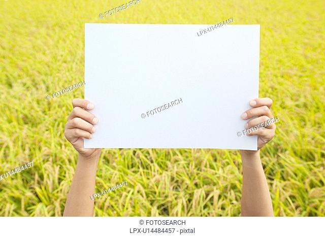 Person Holding Up Blank Message in Rice Field