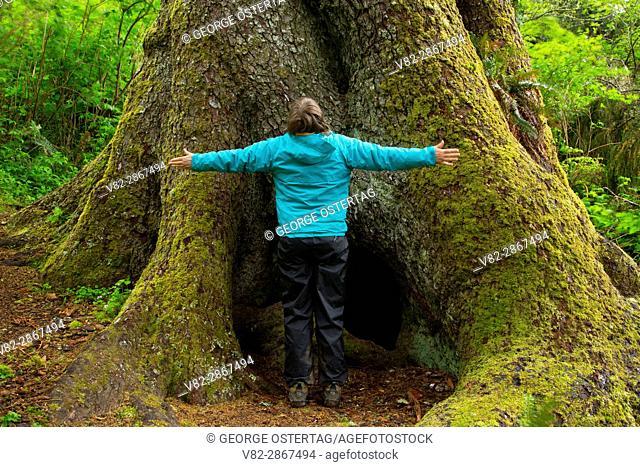 Sitka spruce (Picea sitchensis) legacy tree, Regatta Grounds Park, Lincoln City, Oregon