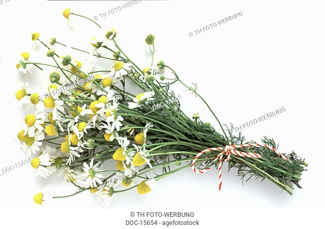 a bunch with chamomile on white subsoil