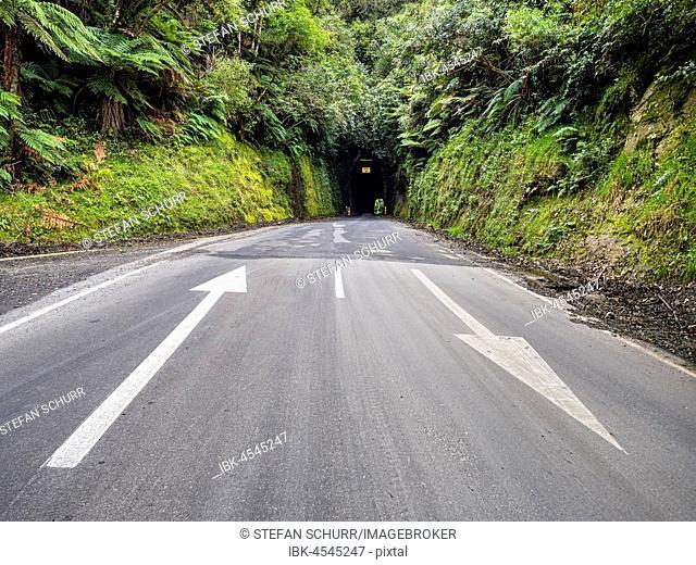 Tunnel, Forgotten World Highway, Taranaki Region, North Island, New Zealand