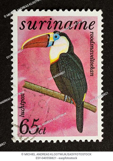 SURINAME - CIRCA 1980: Stamp printed in Suriname shows a White-throated Toucan, circa 1980