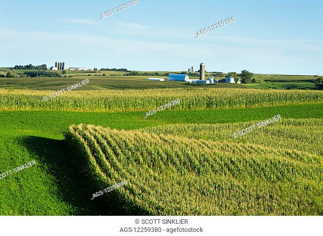 Alfalfa fields and corn fields are terraced among dairy farms; Iowa, United States of America