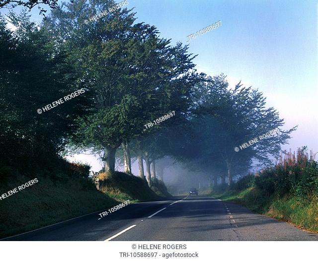 Hedgerows & Country Road Near Plwmp LLandysul Wales