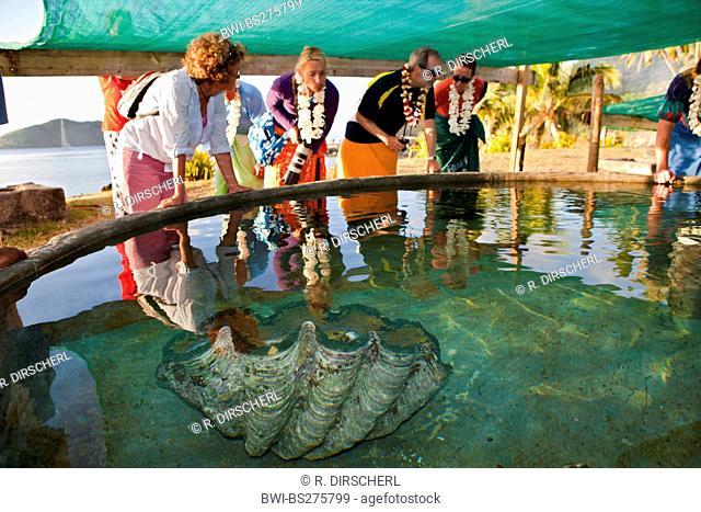 giant clam, killer clam (Tridacna gigas), tourists in a Giant Clam Farm, Fiji, Lomaviti, Makogai