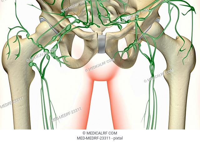 The lymph supply of the pelvis