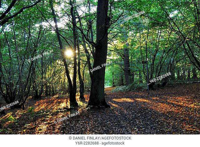 Autumn / Fall in Mad Bess Wood, Ruislip, Greater London, England