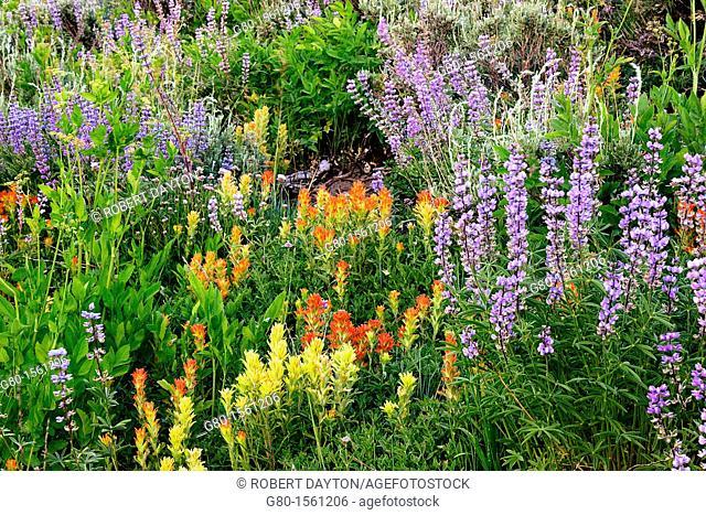 Wildflowers bloom in th El Dorado Forest of Northern California