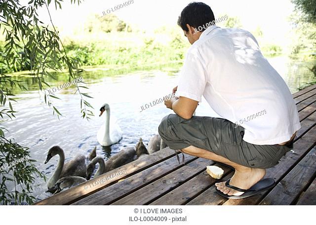 Young man feeding swans