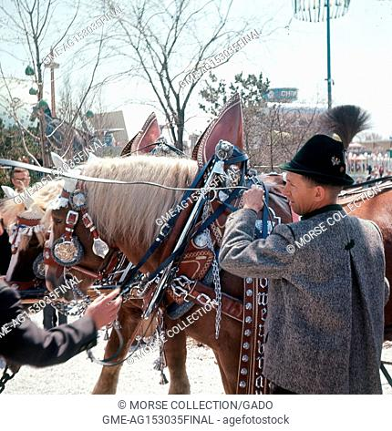 Detail view of a costumed brewery wagon draft horse and its handler posing for visitors in the Lowenbrau Beer Gardens outdoor restaurant