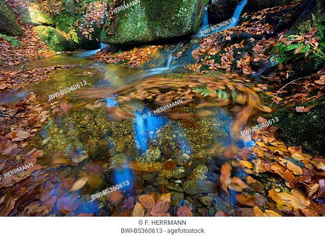 Weisse Elster creek in autumn, Germany, Saxony, Vogtland, Triebtal