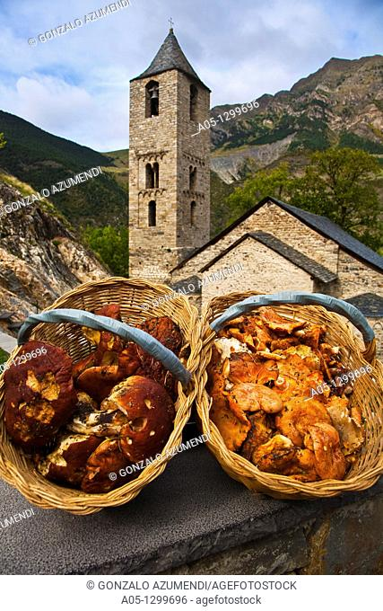 Niscalos Boletus Edulis  Sant Joan de Boí Romanesque church  Boí Valley,Alta Ribagorça, Pyrenees Mountains  Lleida province  Catalunya  Spain