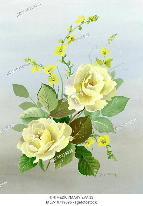Yellow roses with mullein