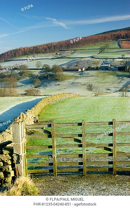 View of gate, drystone walls, trees and farm buildings on hillside, frosty morning, Barden, Wharfedale, Yorkshire Dales N.P