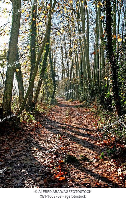 forest, Vallgorguina, Catalonia, Spain