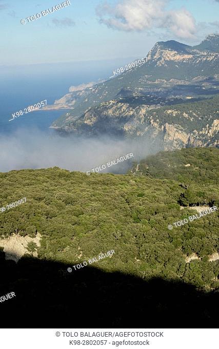Oak above the mountain, Mola de Planícia, 934 mts, Banyalbufar, Sierra de Tramuntana, Mallorca, balearic islands, spain, europe