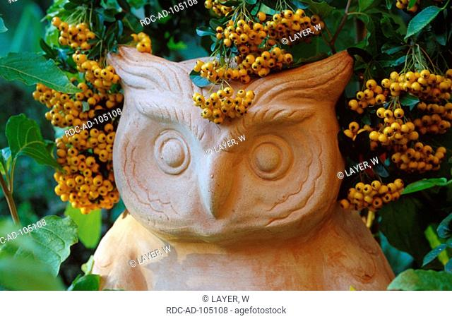 Garden figure  'owl' and Firethorn Germany Pyracantha spec