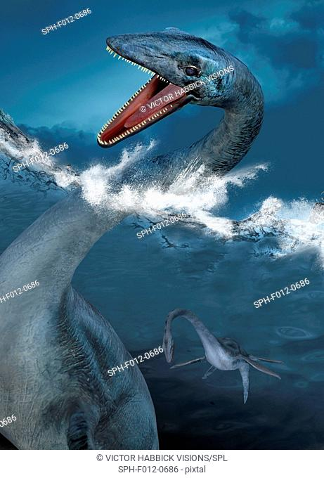 Prehistoric sea creatures, illustration