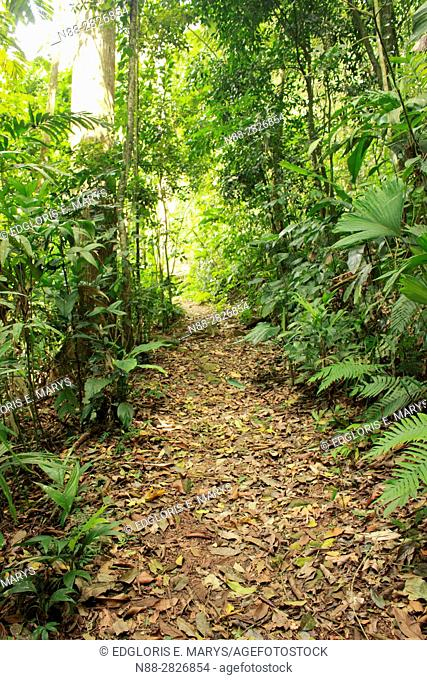 Path in the high jungle Henri Pittier National Park Venezuela