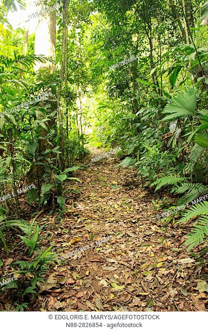 Path in the high jungle Henri Pittier National Park Venezuela