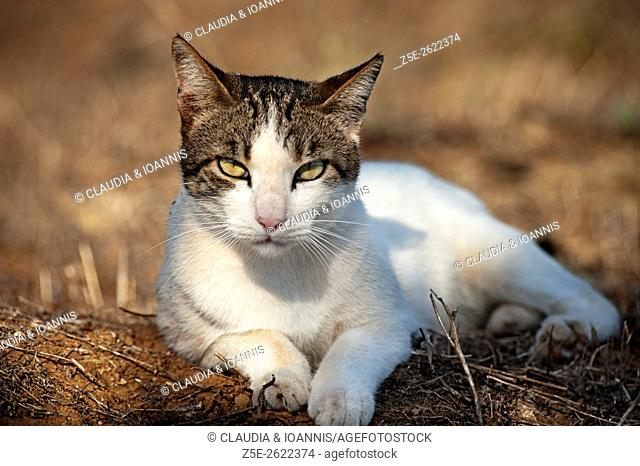 Portrait of a cat lying on arid ground