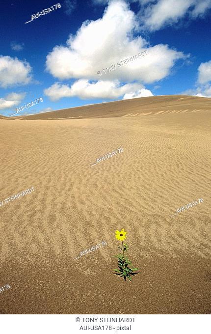 USA - National Park - Colorado - Great Sand Dunes