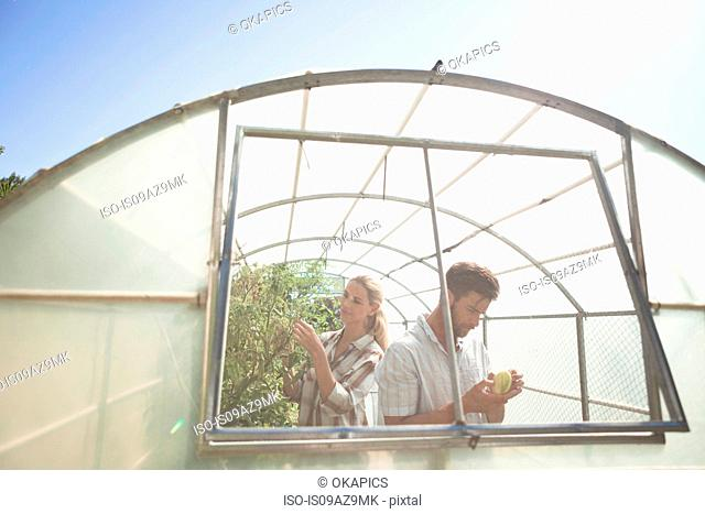 Mature couple tending to plants in greenhouse