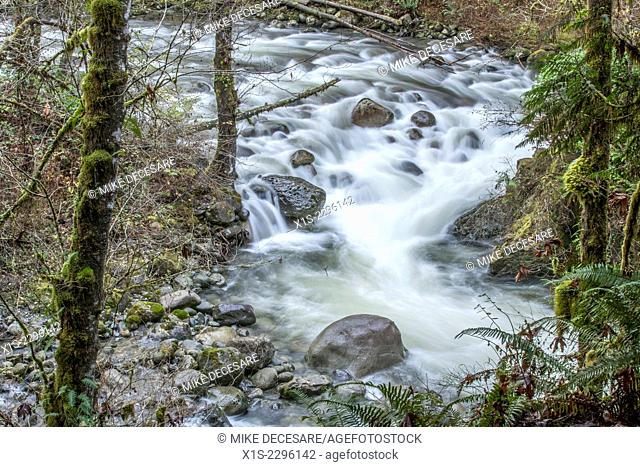 The Wallace River in Western Washington is fast moving and creates mini waterfalls as it rushes over large rock boulders in the water channel