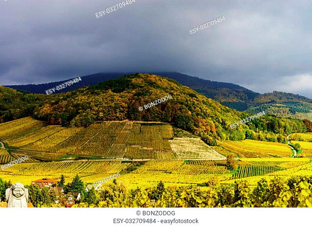 Vivid colors of autumn vineyards in Andlau, Alsace. Contrast colorful weather. Season concept