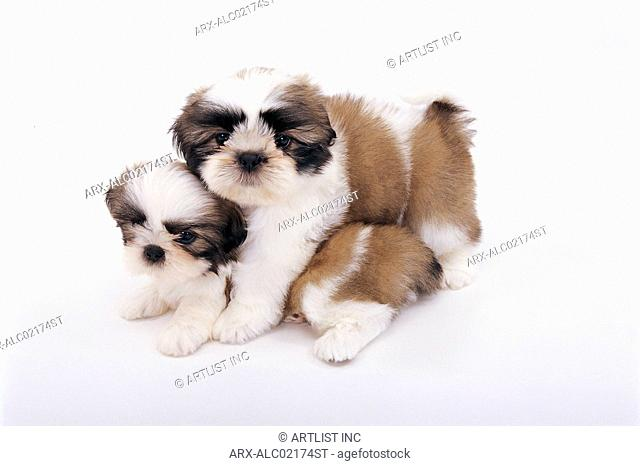 Two hugging puppies