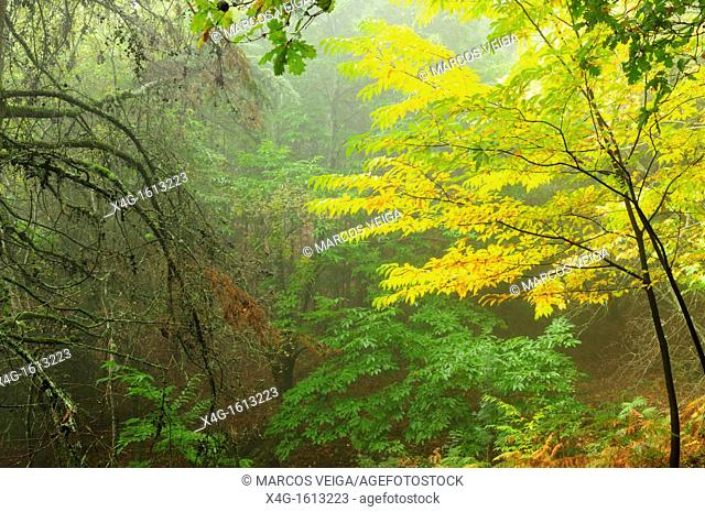 Forest in Mount Aloia Nature Park  Galicia, Spain