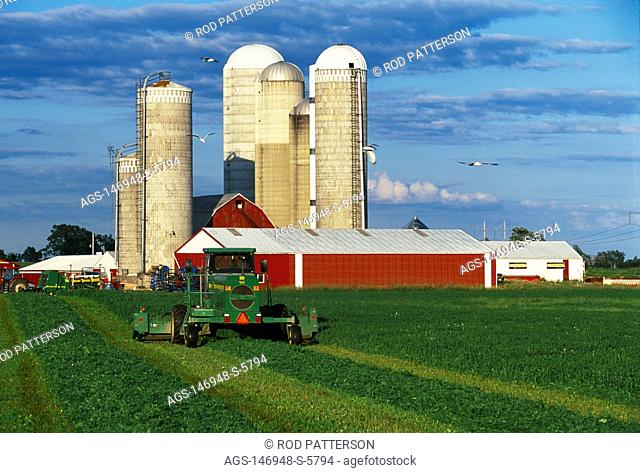 Agriculture - A windrower cuts and windrows alfalfa for drying prior to baling at a large dairy farm with red barns and silos in the background / Green Bay