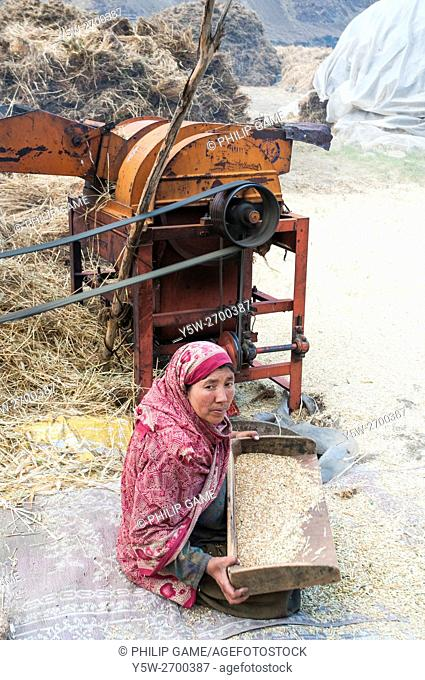 A woman threshes wheat in Turtuk, a Balti village in the remote Nubra Valley of Ladakh in Kashmir, India, near the Indo-Pakistan ceasefire line