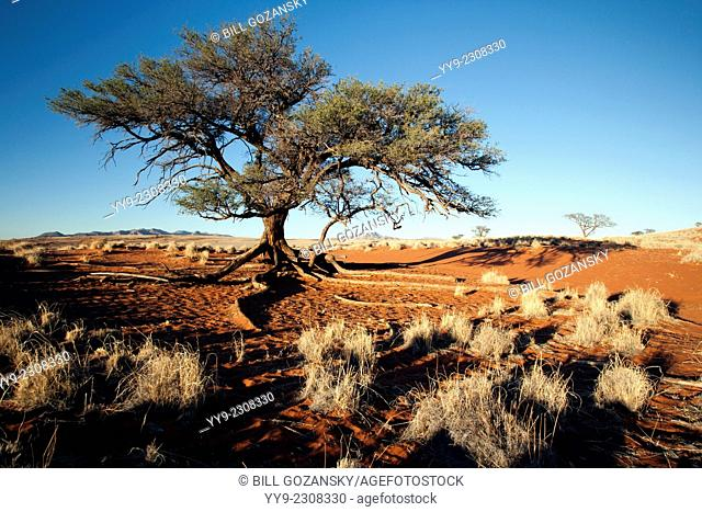 Tree in Wolwedans Landscape - NamibRand Nature Reserve - Hardap Region, Namibia, Africa