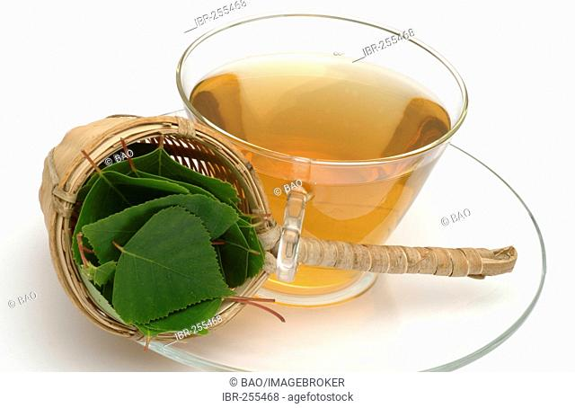 Herb tea made of Betula pendula, Birch, Silver Birch