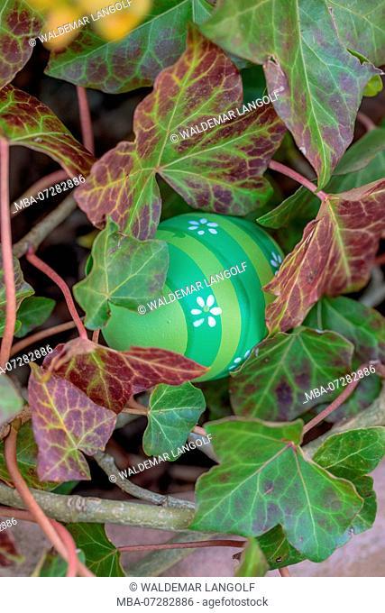 Hiding Easter egg between ivy leaves
