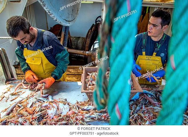 SAILORS WORKING AT THE PRAWN AND FISH SORTING TABLE, SEA FISHING ON THE SHRIMP TRAWLER 'QUENTIN-GREGOIRE' OFF THE COAST OF SABLES-D'OLONNE (85), FRANCE