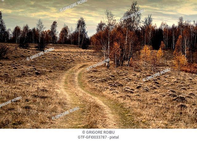 Winding road through birch forest