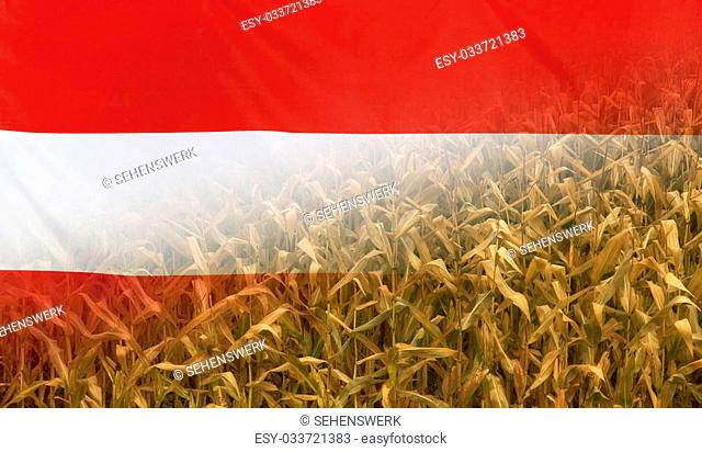 Nutrition food concept corn field in sunny afternoon light merged with fabric flag of Austria