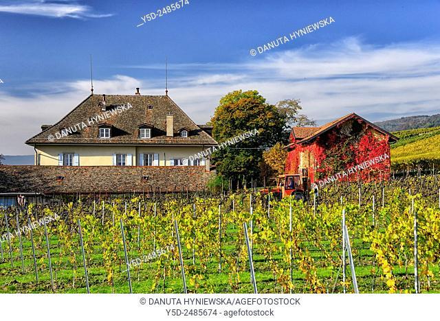 Europe, Switzerland, canton Vaud, Nyon district, Chateau de Malessert in Peroy near Geneva Lake, early autumn