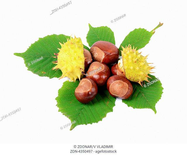 Chestnuts on autumn leaves isolated on white