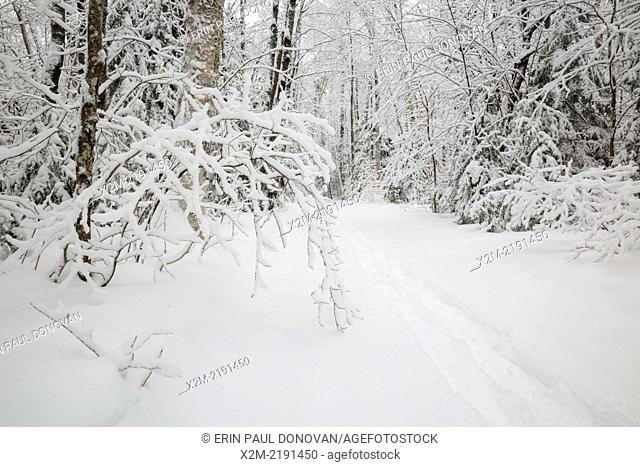 Lincoln Woods Trail in Lincoln New Hampshire USA during the winter months, after a snow storm