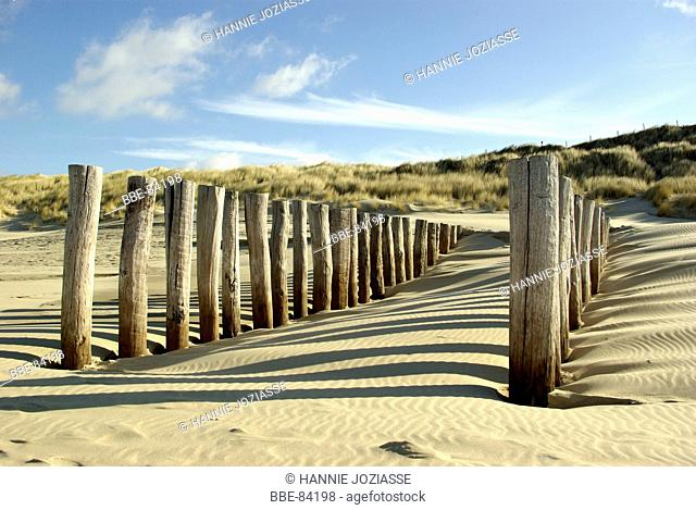 Wooden poles at the beach protect the beach